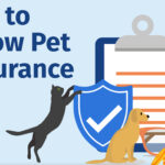 Get To Know Pet Insurance